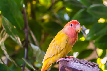 Colorful yellow parrot on stump in the jungle