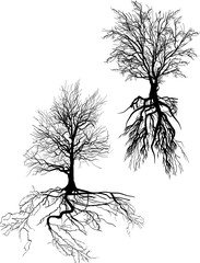 two black trees with roots on white