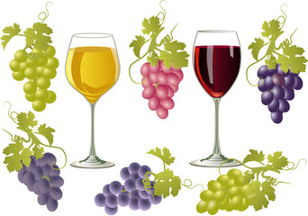Vector illustration of glasses of wine and bunches of grapes