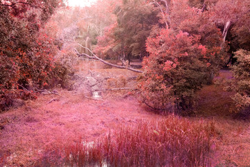 Aluminium Prints Candy pink mistery red forest