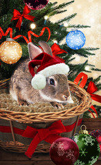 Christmas gift rabbit