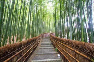 Poster Bambou Bamboo Grove in Kyoto Japan
