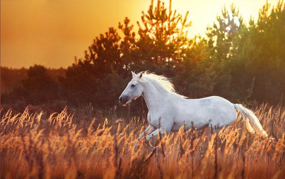 white horse run