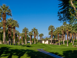 Palm trees at a golf Resort in Palm Springs
