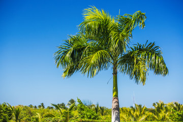 Palm tree and tropical nature