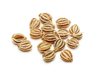 Macro closeup of Organic Ajwain (Trachyspermum ammi) isolated on white background.