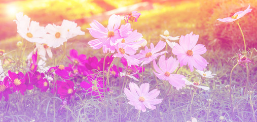 Abstract soft Blurry of Flower and colorful background. Beautiful flowers made with colorful filters,Blossom pink flower in a beautiful day with color filters.