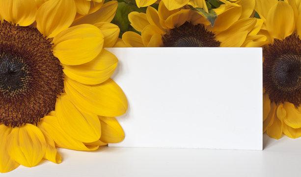 Photo of blank card among sunfliowers