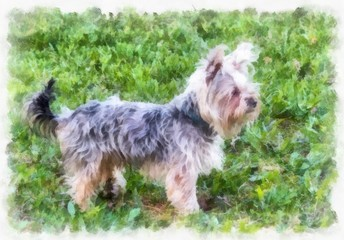 Painted Yorkshire Terrier