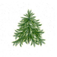 Christmas tree isolated on white background and snow. Christmas pine twigs and spruce branches. Vector, EPS 10.