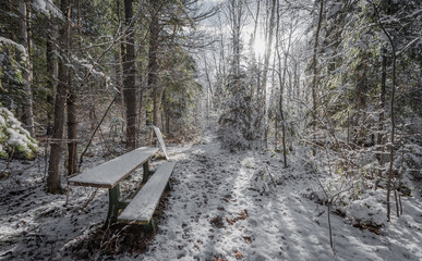 A snow covered bench in the woods along a walking trail.  Foot path in winter woods. Fresh fallen snow with backlit trees on winter day.