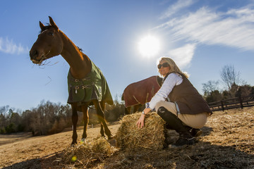 Equestrian Model and Horses