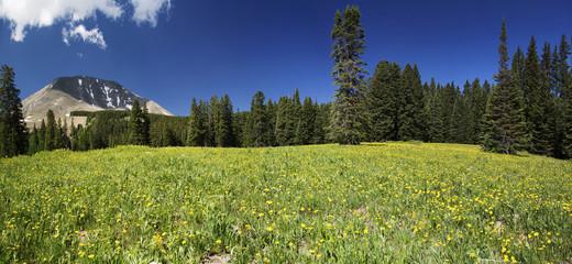 Meadow and Mount Peale in Utah Panoramic