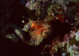Corals and marine creatures