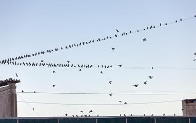 birds on a house roof