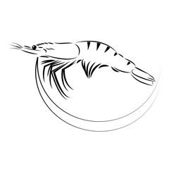 drawing shrimp