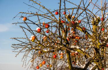 winterlicher Baum mit roten Äpfeln