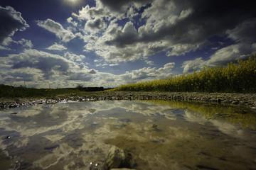 Rapsfeld in einer Pfütze am Wegesrand,Spiegelung der ziehenden Wolken und des Papsfeldes in einer Pfütze