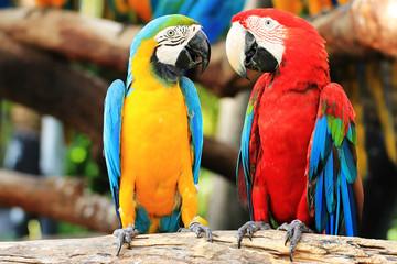 Fotobehang Papegaai parrots