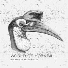 Bucorvus abyssinicus