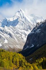 Mountain peak and pine trees