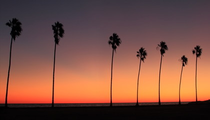 Silhouette of row if Palm trees at sunset on tropical beach
