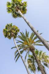 promenade along the sea of palms in Marbella Andalucia Spain