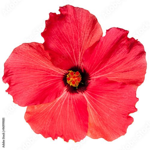 Red Pink Tropical Hibiscus Flower
