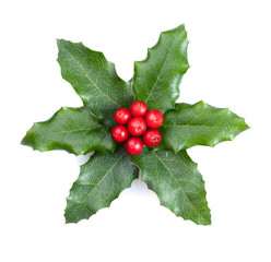 Holly with berries isolated on white background