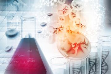 Human fetus in scientific background