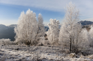 Winter landscape. Frost morning in mountains.