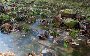 Creek with stones and leaves