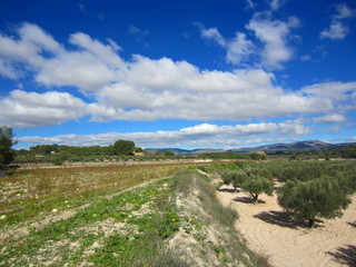 Spanish olive and watermelon fields