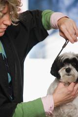 Dog having hair cut