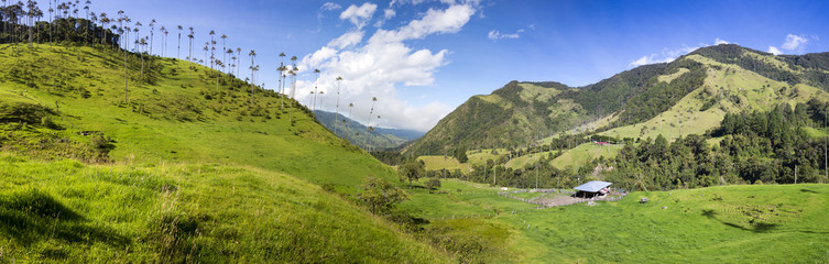 Canvas Prints Hill Cocora valley with giant wax palms near Salento, Colombia