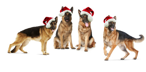 Santa's German shepherd dogs