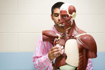Student using anatomical model