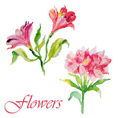 Watercolor flowers alstroemeria
