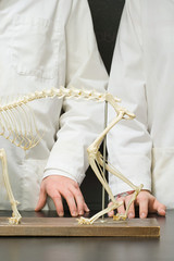 Two students stood with an animal skeleton