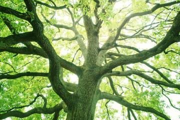 新緑 木 エコロジー