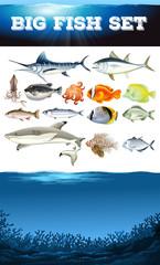 Sea animals and ocean scene