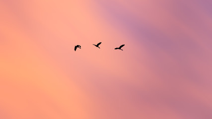 abstract silhouette birds flying on beautiful sunset sky