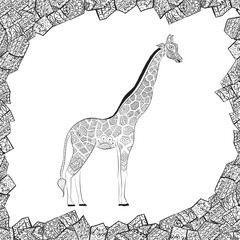 Beautiful adult Giraffe. Hand drawn Illustration of ornamental giraffe.  isolated giraffe on white background. The head of an ornamental giraffe