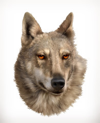 Wolf head, realistic vector illustration