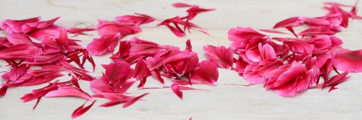 Blüten einer Pfingstrose