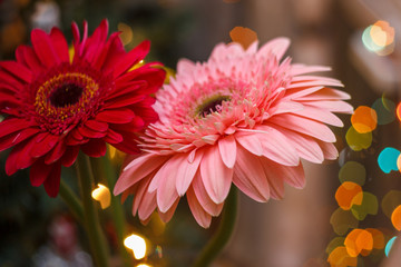 gerbera flowers with blur effect