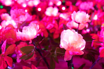 Artificial pink flower has led light in it.