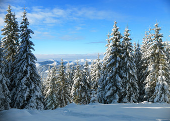 Winter forest on background of mountains
