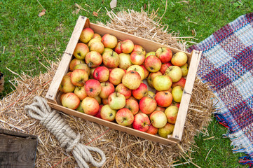 Large wooden box containing red and green apples outside