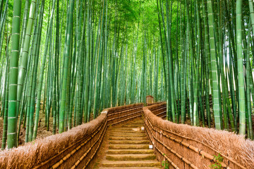 Wall Murals Forest Kyoto, Japan Bamboo Forest